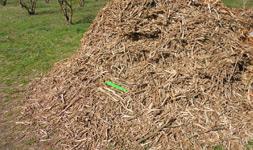 cippato-potatura-nocciolo-coltivare-nocciole